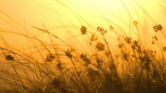 Orange sun grass sunray wind wallpaper