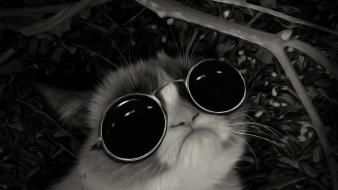 Sunglasses john lennon post awsome grumpy cat Wallpaper