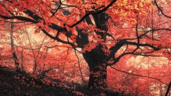 Trees red orange leaves chakra Wallpaper