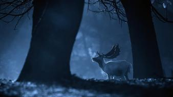 Animals deer forests monochrome night wallpaper