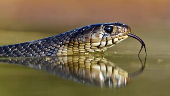 Animals duplicate reflections reptiles snakes wallpaper