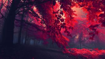 Autumn red forest wallpaper