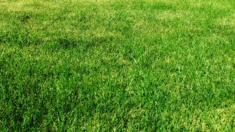 Backgrounds grass green nature pasture wallpaper