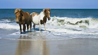 Beach horses seascapes wallpaper