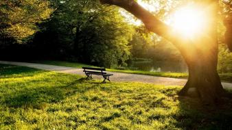 Bench grass landscapes nature parks wallpaper