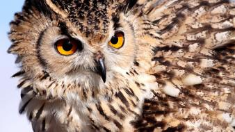 Birds animals owls wallpaper