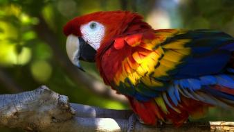 Birds animals parrots scarlet macaws macaw wallpaper