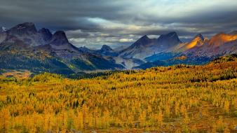 British columbia canada larch clouds forests wallpaper