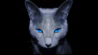 Cats blue eyes animals pets black background wallpaper