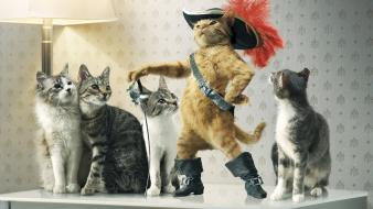 Cats puss in boots wallpaper