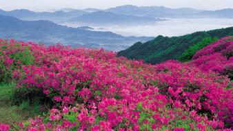 Clouds flowers hills landscapes mist wallpaper