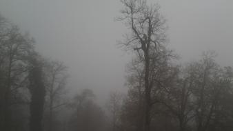 Creepy trees fog lonely algeria annaba black forest wallpaper