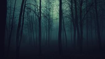 Dark fog forests gloomy mist wallpaper