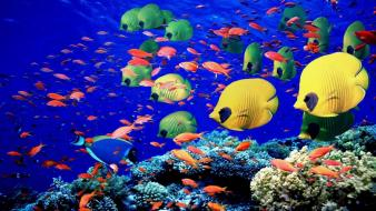 Egypt fish red sea tropical wallpaper