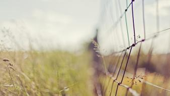Flora bokeh depth of field fences nature wallpaper