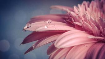 Flowers pink macro wallpaper
