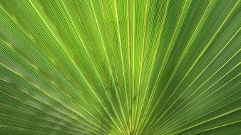 Green holidays leaves palm plants Wallpaper