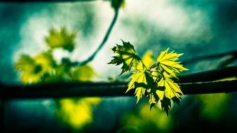 Green leaves light nature sunlight wallpaper