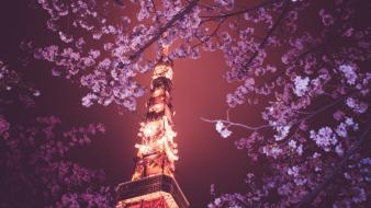 Japan cherry blossoms tokyo night tower low-angle shot wallpaper