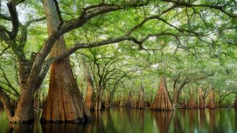 Landscapes nature trees forests rivers cypress sanctuary Wallpaper