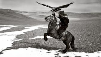 Mountains horses grayscale mongolia hawks hamid sardar wallpaper