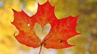 Nature autumn (season) leaves maple leaf hearts wallpaper