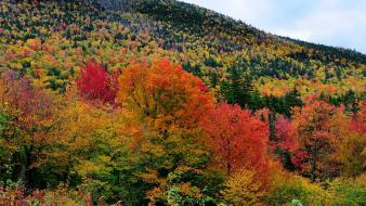 Nature trees autumn multicolor Wallpaper