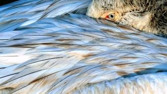 Nature wings eyes birds feathers national geographic wallpaper