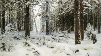Nature winter forests wallpaper