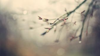 Water drops depth of field branches season Wallpaper