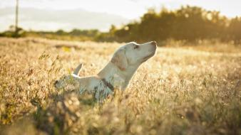 Animals dogs fields Wallpaper