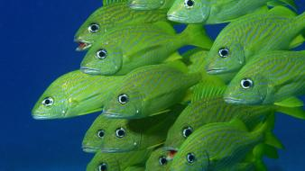 Animals fish school Wallpaper