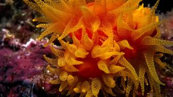 Animals sea anemones underwater sealife Wallpaper