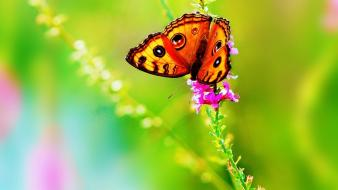 Beautiful butterfly flower wallpaper