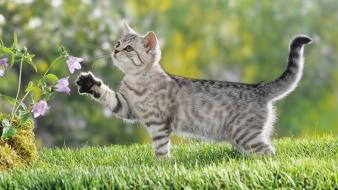 Cats animals grass british kittens wallpaper