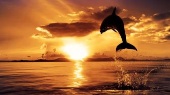Dolphin in sunset wallpaper
