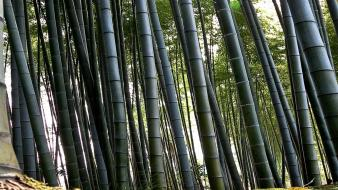 Forest bamboo multiscreen wallpaper