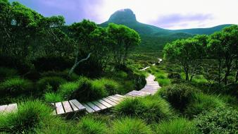 Green landscapes nature trees forests hills tasmania Wallpaper