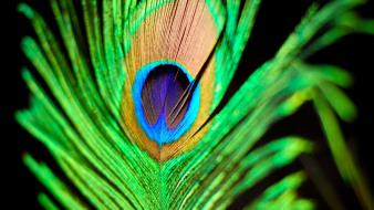 Green yellow feathers peacocks wallpaper