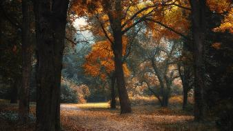 Landscapes nature trees autumn garden paths enchanted Wallpaper
