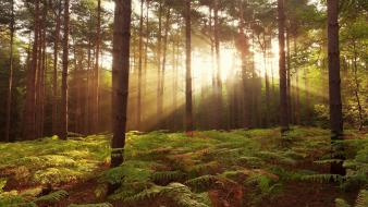 Landscapes nature trees dawn forest united kingdom wallpaper
