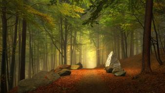 Trees forests paths trail mystical autumn leaves wallpaper