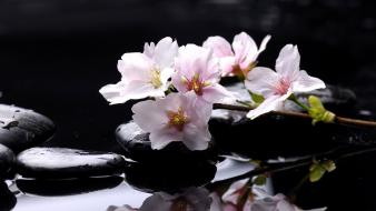 Water flowers stones drops magnolia reflections wallpaper