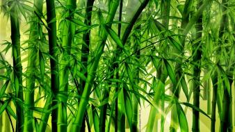 Abstract backgrounds bamboo forests wallpaper