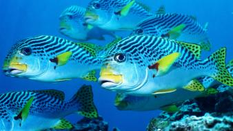 Animals fish underwater wallpaper