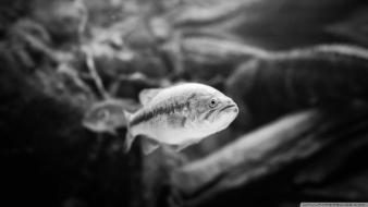 Black and white animals fish sealife wallpaper