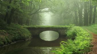 Bridges fog forests mist nature wallpaper
