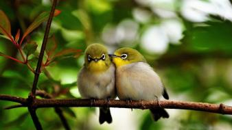 Cute birds wallpaper