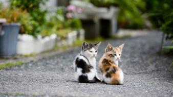 Cute twin kittens wallpaper
