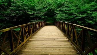 Forest bridge wallpaper